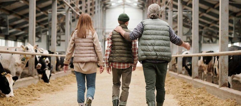 older farmer walks his teenage daughter and son through cattle farm